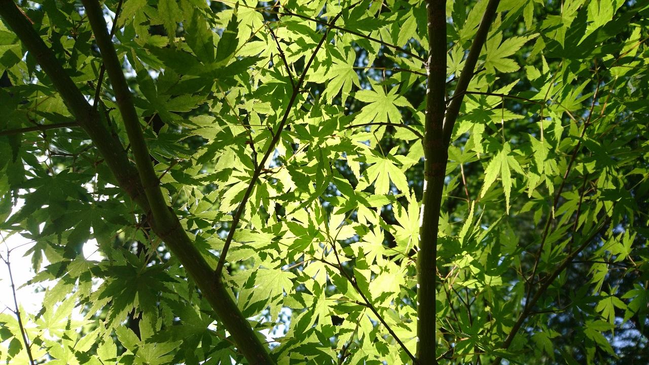 leaves-light