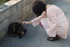 リヨンの猫