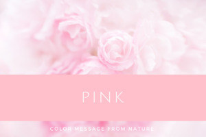ピンク(数秘6)無条件の愛
