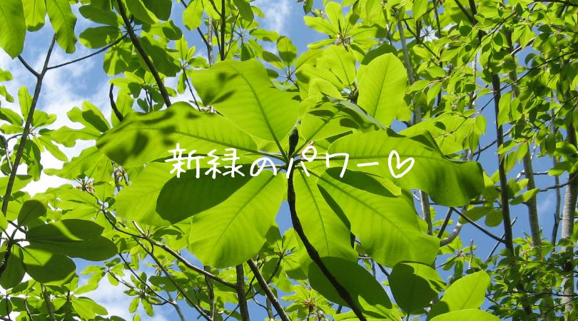 新緑のパワー