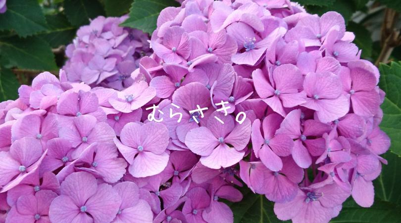 バイオレット(紫)第7チャクラ