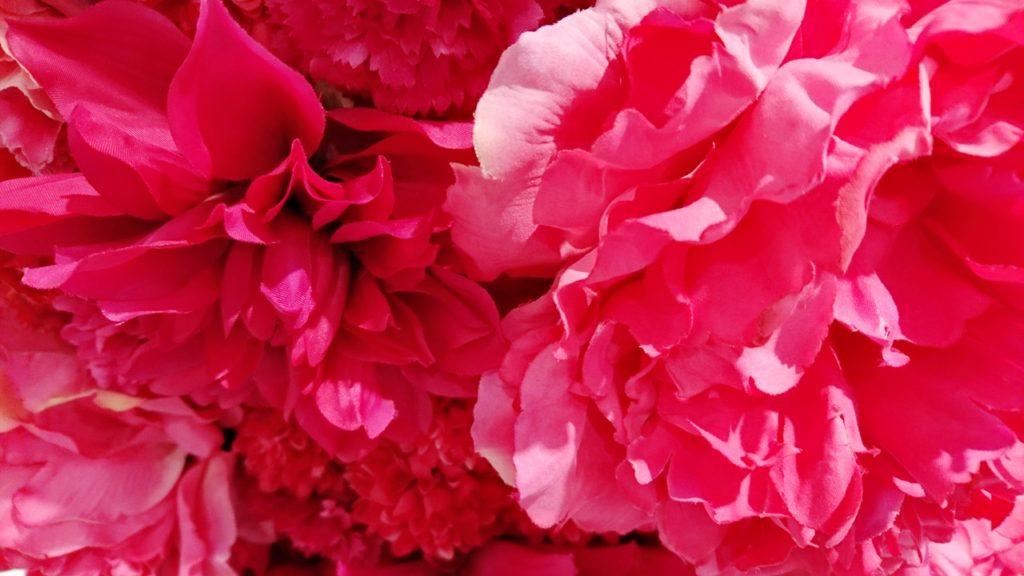 マゼンタの花