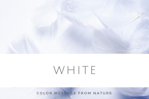 数秘1 ホワイト