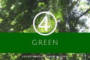 数秘4 グリーン