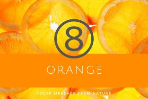 数秘8 オレンジ