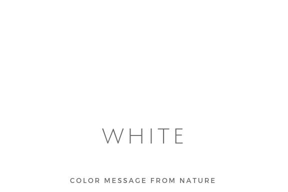 カラー(白)ホワイト