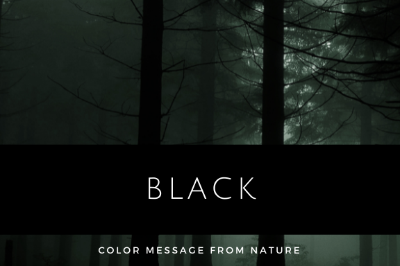 ブラック 黒